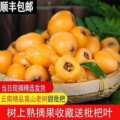 顺丰包邮枇杷新鲜大果精选优质云南枇杷果大五星当季孕妇小孩水果