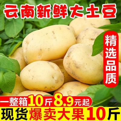 【超低特价】10斤云南生态土豆大洋芋马铃薯农家新鲜蔬菜5斤包邮