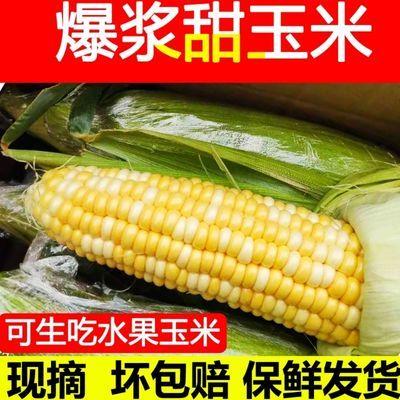 云南水果玉米新鲜现采摘甜脆玉米即食可生吃佐餐爆浆嫩棒1/5/10斤