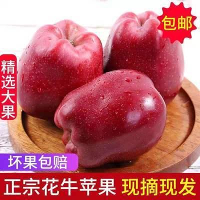 甘肃天水花牛苹果新鲜水果应季红蛇果粉面刮泥老人宝宝平安果