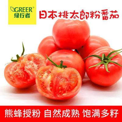 【绿行者】桃太郎粉番茄新鲜西红柿沙瓤可生吃自然熟孕妇水果5斤