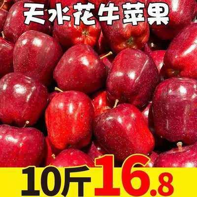 甘肃天水花牛苹果3/10斤粉面苹果蛇果新鲜应季水果孕妇宝宝辅食