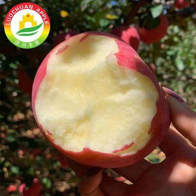 【顺丰包邮】]陕西洛川红富士苹果净重5斤装苹果80mm以上