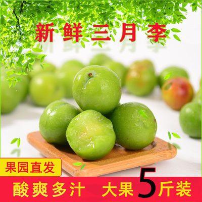 云南元江三月李孕妇爱吃解馋新鲜水果李子腌制清脆酸李子奇葩水果