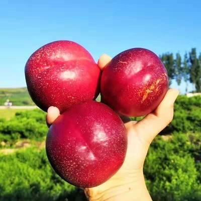 油桃新鲜水果黄心脆甜油桃子当季孕妇水果批发非毛桃水蜜桃1/5斤