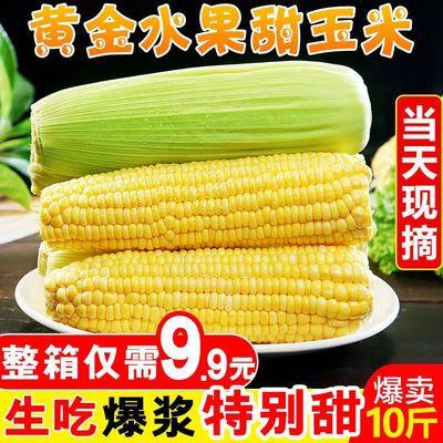 云南黄金水果玉米脆甜爆汁生吃玉米甜苞米甜玉米棒子包谷现摘现发