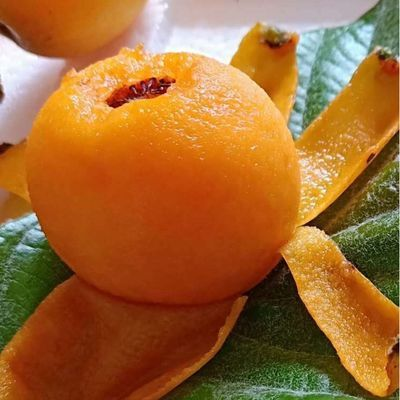 新鲜水果大五星甜枇杷孕妇水果现摘现发琵琶大果自家种植