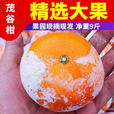 广西武鸣茂谷柑新鲜大果10斤脏脏柑橘石灰柑当季新鲜水果橘子包邮