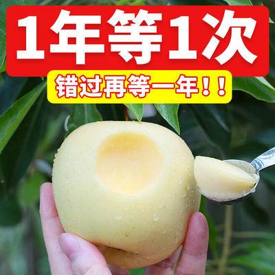冰糖心奶油苹果爆甜牛奶苹果黄金奶油富士苹果现摘现发新鲜好水果