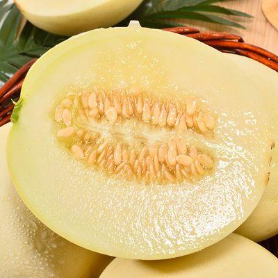 陕西阎良甜瓜香瓜新鲜10斤当季时令水果小脆瓜现摘白皮瓜甜蜜瓜果