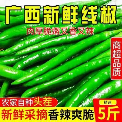 现摘现发自家种植新鲜青辣椒线椒二荆条青椒批发包邮
