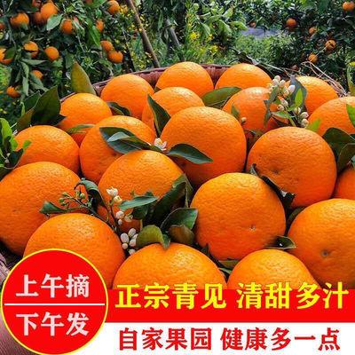 现摘四川青见当季新鲜孕妇水果桔子橘子2/5/10斤非果冻橙丑橘橙子