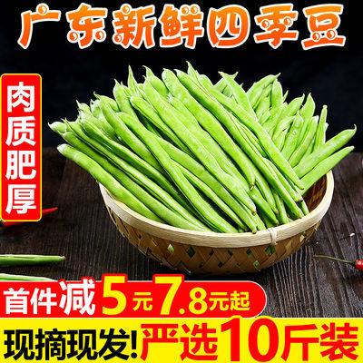 新鲜四季豆10斤批发农家当季现摘芸豆无筋豆扁青豆角蔬菜1斤整箱