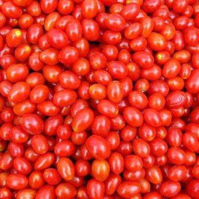 露天圣女果新鲜蔬菜小番茄当季整箱现摘。