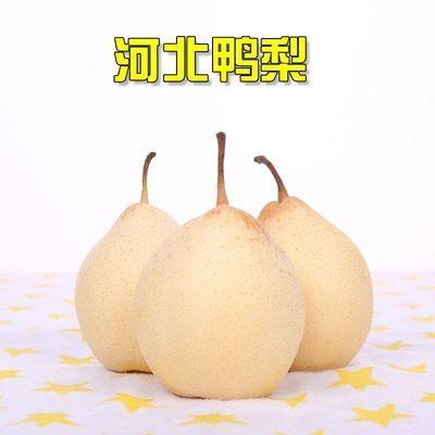河北正宗鸭梨水晶梨3斤装整箱批发新鲜水果脆甜多汁单果200g起