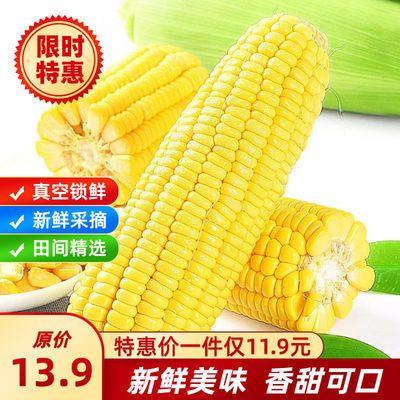 云南水果玉米新鲜甜整箱甜玉米棒生吃蔬菜甜玉米