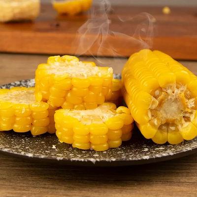 正宗东北黄糯玉米粘玉米熟黏玉米早餐代餐真空包装黄糯玉米中大棒