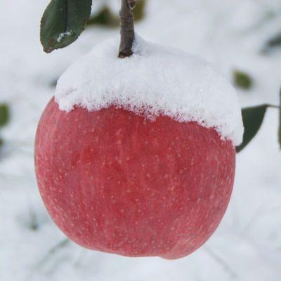 6斤装红富士苹果水果批发正宗红富士苹果脆甜多汁水果批发