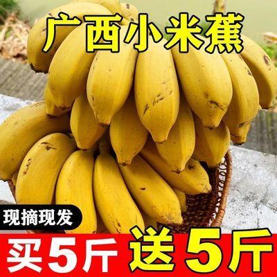 正宗广西小米蕉10斤当季新鲜水果整箱5斤3自然熟小香蕉皇帝蕉芭蕉