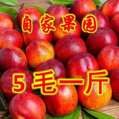 【脆甜多汁】黄心油桃新鲜水果现摘黄肉油桃非水蜜桃毛桃整箱批发