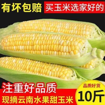 云南金银水果玉米新鲜现摘水果甜玉米生吃鲜嫩爆浆一级