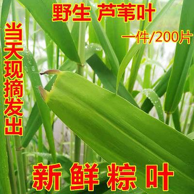 正宗白洋淀新鲜粽叶粽子叶大粽叶包粽子野生天然粽子竹叶纯天然