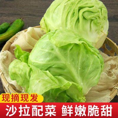 绿甘蓝菜新鲜蔬菜包邮沙拉配菜现摘现发小甘蓝菜卷心菜小甘蓝包菜