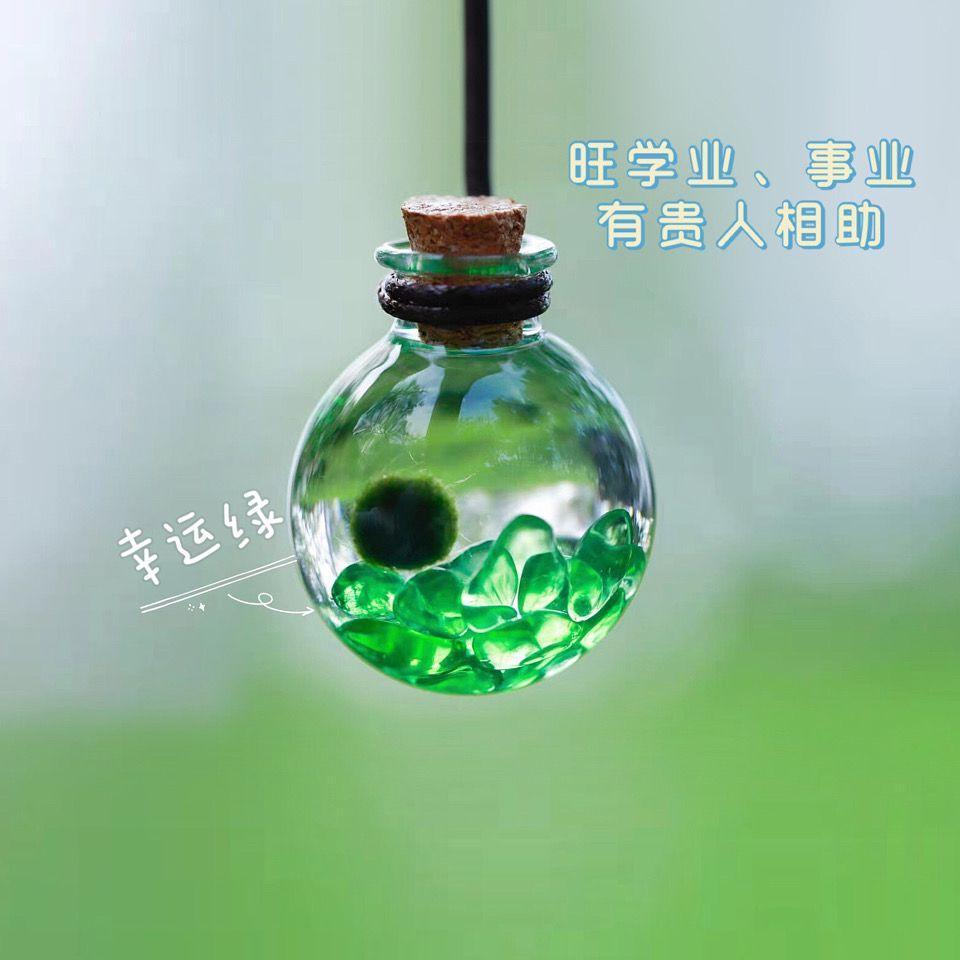 海藻球宠物marimo海藻球diy随身瓶水晶生态瓶海藻球微景观许愿瓶