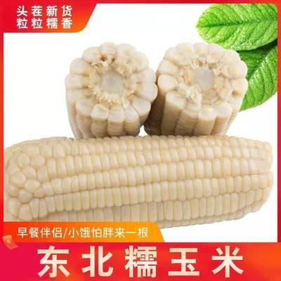 东北特产新鲜黑糯玉米棒玉米粒甜糯粘玉米水果玉米代餐非转基因