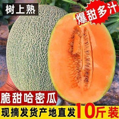 海南哈密瓜当季新鲜水果批发西州蜜瓜甜瓜网纹瓜一箱多规格