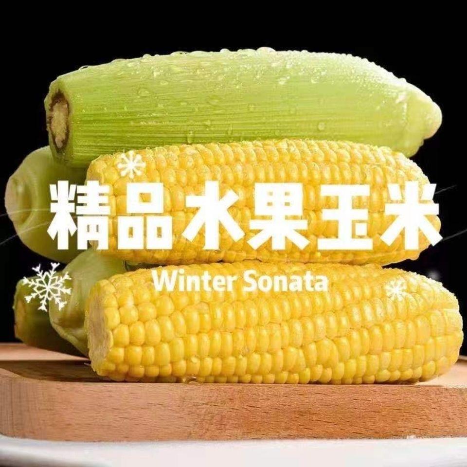 【爆甜多汁】云南新鲜超甜玉米水果玉米生吃爆浆嫩现摘蔬菜5斤