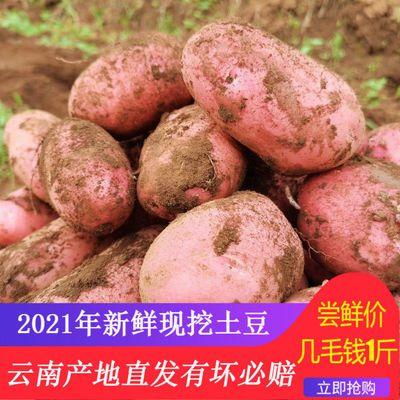 云南现挖新鲜洋芋红皮黄心大土豆高原黄心马铃薯蔬菜5-10斤包邮