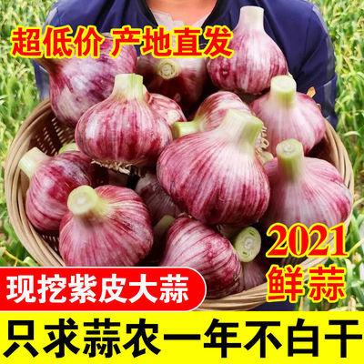 【新鲜现挖】紫皮大蒜头湿蒜嫩蒜河南农家大蒜干蒜超低价批发