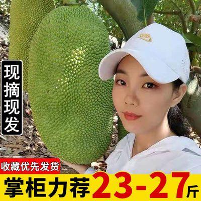 现摘发货海南三亚菠萝蜜新鲜水果当应季一整个黄波罗蜜批发非红肉