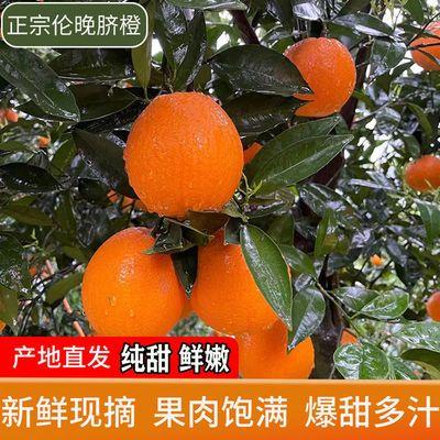 秭归伦晚脐橙橙子新鲜水果超甜应当季现摘冰糖甜橙整箱包邮手剥橙