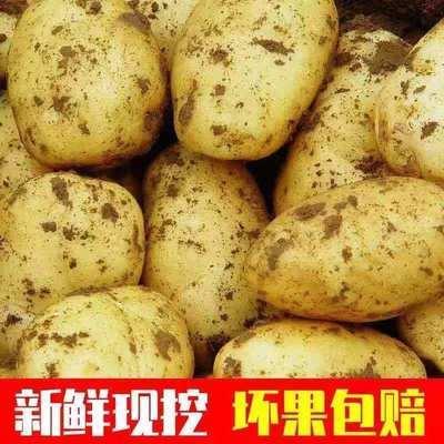 土豆批发黄心土豆批发小土豆新鲜土豆洋芋批发新土豆3/10斤马铃薯