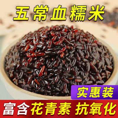 【五常血糯米】新米东北黑糯米包粽子米紫糯米1斤5斤批发五谷杂粮