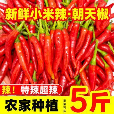 小米辣椒新鲜特辣5斤朝天椒超辣农家自种小米辣椒新鲜指天椒100g