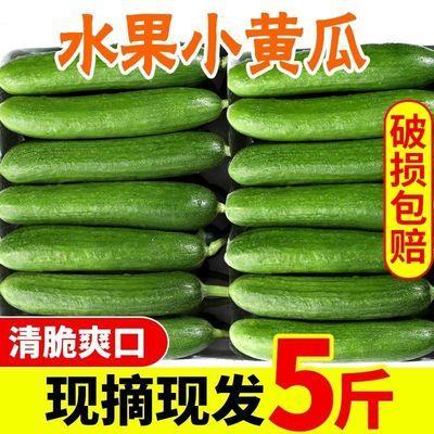 水果小黄瓜坏果包赔荷兰3斤5斤生吃现摘现发新鲜无刺小黄瓜
