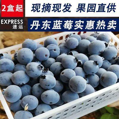 空运现货 丹东蓝莓新鲜水果 蓝莓鲜果大果蓝梅8盒装125克整箱批发