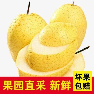 河北雪花梨正宗雪梨应季水果新鲜3斤5斤10斤止咳润肺整箱批发梨子