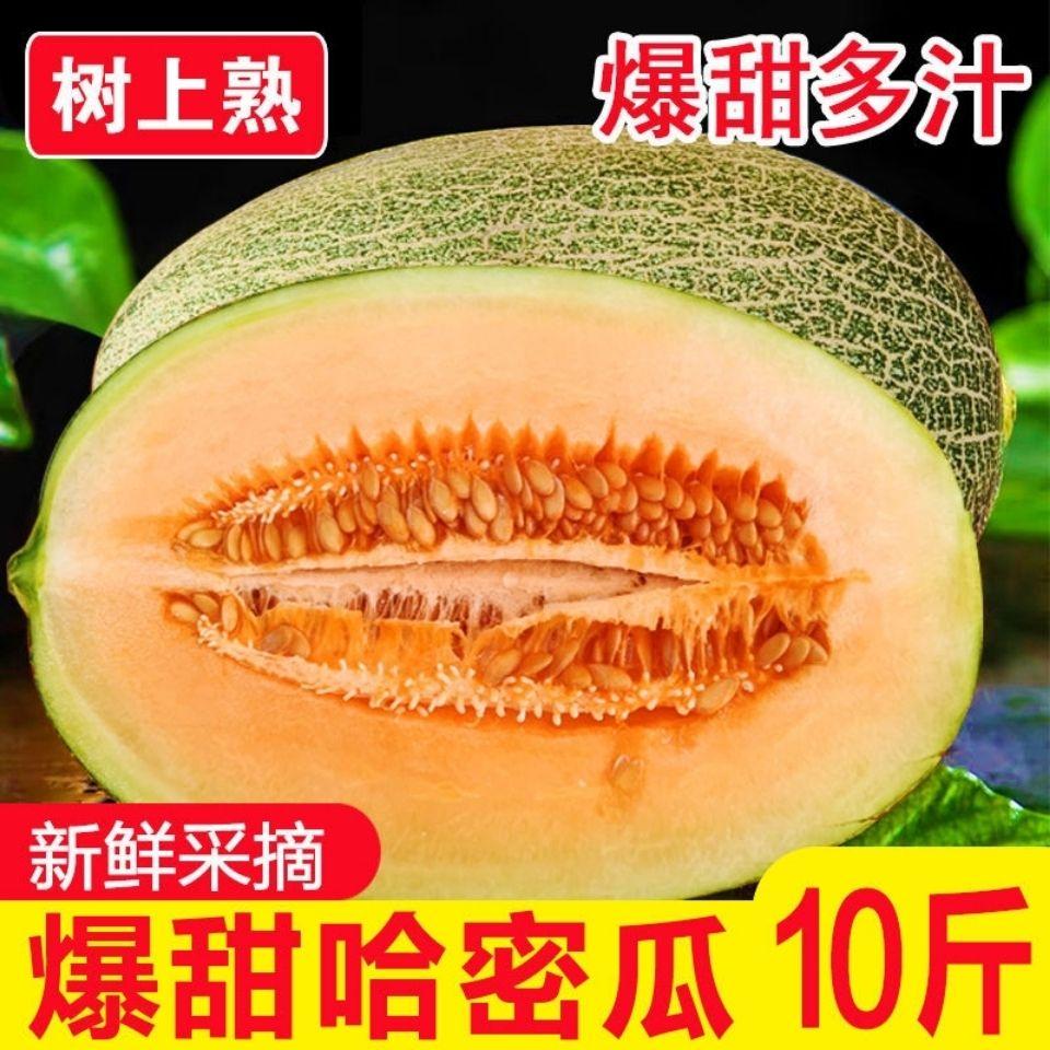 海南哈密瓜新鲜当季水果现摘甜瓜网纹瓜西州蜜瓜孕妇水果批发包邮