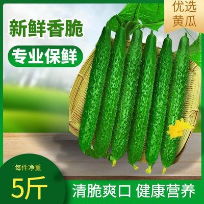 新鲜黄瓜农家自种现摘现发精品带刺水果黄瓜青瓜蔬菜生吃清脆爽口