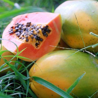 当季糖心木瓜装水果新鲜现摘红心木瓜树上熟整箱10