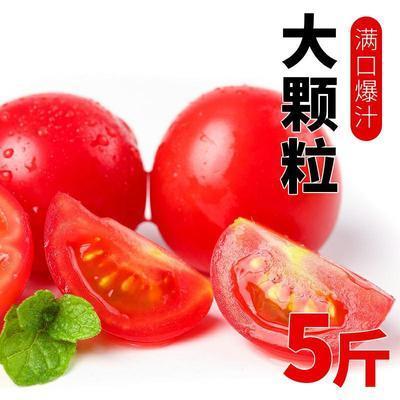 新鲜圣女果5斤樱桃小番茄小柿子西红柿2斤3斤非千禧水果蔬菜
