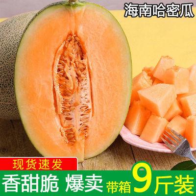 海南哈密瓜西州蜜25号甜瓜新鲜水果包邮当季整箱网纹瓜香甜应季