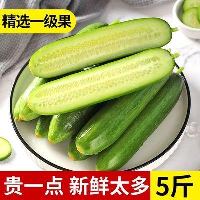新鲜水果小黄瓜当季云南小青瓜3/5/10斤批整箱生吃蔬菜孕妇包邮