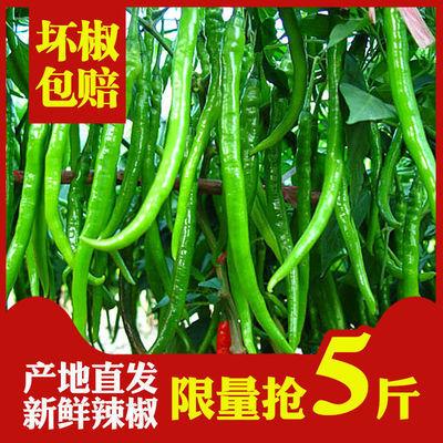 贵州山区露天农家种植青椒新鲜线椒遵义二荆条现摘新鲜青椒味正