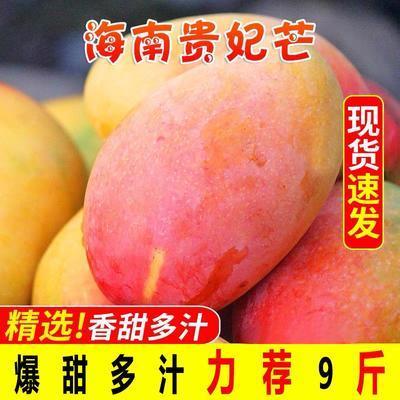 海南贵妃芒果10斤装整箱当季水果批发3/5/10斤装红金龙热带小芒果
