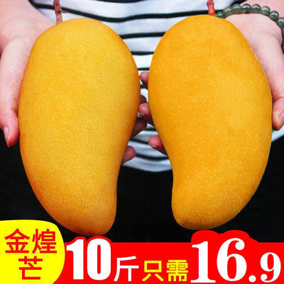【核薄】金煌芒新鲜热带水果包邮当季整箱大青玉芒果2/5/10斤批发
